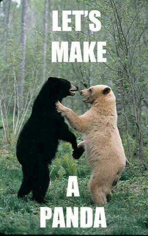 bear2Panda