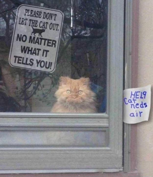 catbadcat